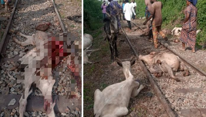 Train Derails, Kills 47 Cattle In Osun State